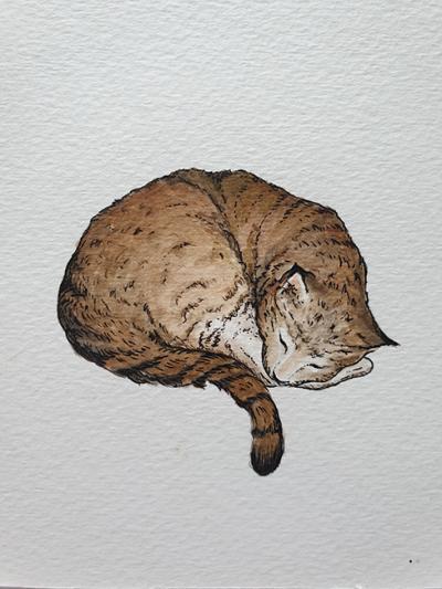 Si Kucing bagian dari Binatang Tertidur.